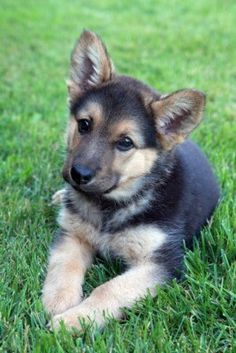 Gsdpup