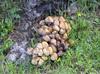 Happy_mushrooms